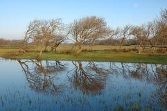bolgheri krajobraz Zdjęcia Royalty Free