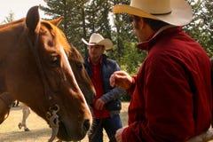 BOLGHERI TUSCANY: SEPTEMBER 27, 2008 - en häst mellan skogar Royaltyfri Bild