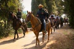 BOLGHERI TUSCANY: SEPTEMBER 27, 2008 - en häst mellan skogar Royaltyfria Foton