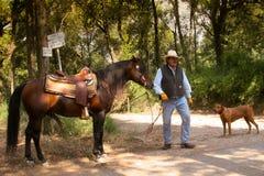 BOLGHERI TUSCANY: SEPTEMBER 27, 2008 - en häst mellan skogar Fotografering för Bildbyråer