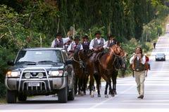 BOLGHERI TUSCANY: SEPTEMBER 27, 2008 - en häst mellan skogar Arkivfoto