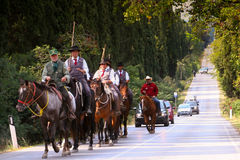 BOLGHERI TUSCANY: SEPTEMBER 27, 2008 - en häst mellan skogar Royaltyfri Fotografi