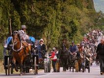 BOLGHERI TUSCANY: SEPTEMBER 27, 2008 - en häst mellan skogar Arkivbilder