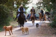 BOLGHERI, TUSCANY: WRZESIEŃ 27, 2008 - koń między lasami Fotografia Stock