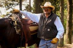 BOLGHERI, TUSCANY: WRZESIEŃ 27, 2008 - koń między lasami Obrazy Stock