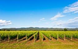 Bolgheri vineyard and hills. Maremma Tuscany, Italy Royalty Free Stock Image