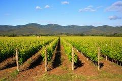 Bolgheri vineyard and hills. Maremma Tuscany, Italy Stock Photos