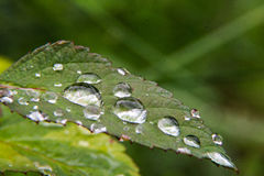 Bolha da água em uma folha da flor Imagem de Stock Royalty Free