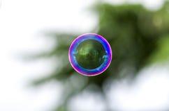 Bolha de sabão Imagem de Stock