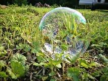 Bolha de sabão na grama verde fotografia de stock