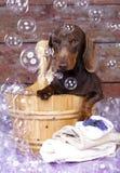 Bolha do bassê e de sabão do cão imagens de stock royalty free