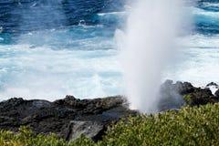 Bolha dos consoles de Galápagos Fotografia de Stock Royalty Free