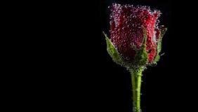 Bolhas de Rosa Imagens de Stock Royalty Free