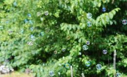 Bolhas de sabão em um fundo de árvores verdes Fotografia de Stock Royalty Free
