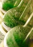 Bolhas verdes fotos de stock royalty free