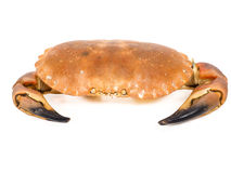 Bolied orange color crab isolated on white Royalty Free Stock Image