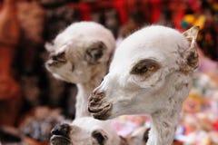 Bolivië, La Paz, de Markt van Heksen Royalty-vrije Stock Fotografie