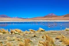bolivia öken laguna Fotografering för Bildbyråer