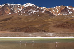 Bolivia, beautifull Andes in South America Stock Images