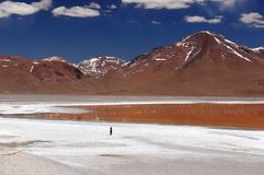 Bolivia laguna colorada and flamingoes Stock Images
