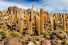 Salt lake Salar de Uyuni is located near Uyuni, Bolivia. It is the worlds largest salt flat. stock image