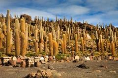 Salt lake Salar de Uyuni is located near Uyuni, Bolivia. It is the worlds largest salt flat. stock photo