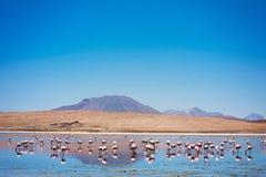 Bolivia que sorprende Foto de archivo libre de regalías