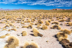 Boliviaans landschap royalty-vrije stock afbeeldingen