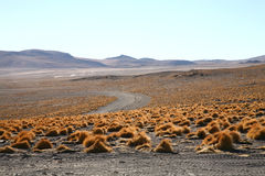 Bolivian altiplano. Desert grass on the plains of Andean Bolivia stock image