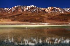 bolivian berg s Arkivbild