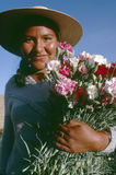 Bolivian girl holding bunch of carnations. Which she has picked from the field stock photography
