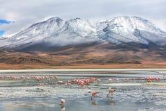 bolivian krajobraz Fotografia Stock