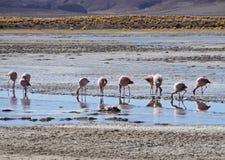 bolivian krajobraz Obraz Stock