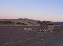 Bolivian Landscape. Bolivia, Potosi Departmant, Sur Lipez Province, Eduardo Avaroa Andean Fauna National Reserve, Sol de Manana, Nightfall view towards Volcano Stock Image