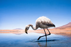 Lake of Altiplano Royalty Free Stock Photos