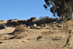 Bolivian village on the shores of lake Titicaca Royalty Free Stock Photography