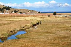 Bolivian village on the shores of lake Titicaca Stock Image