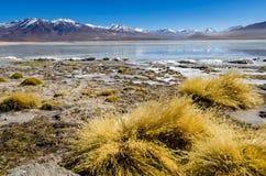 Bolivianische Ebene mit See und Bergen Lizenzfreie Stockfotos
