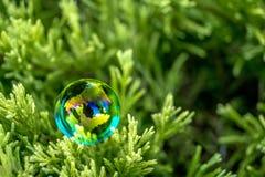 Bolla di sapone sull'erba verde Fotografia Stock Libera da Diritti