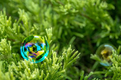 Bolla di sapone sull'erba verde Immagine Stock