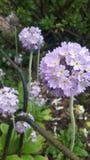 Bollar av blommor royaltyfri fotografi
