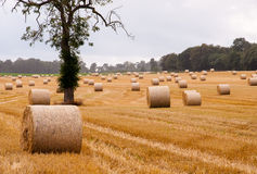 Bollar av hö på ett fält Arkivbild