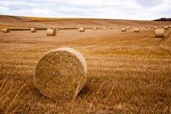 Bollar av hö på ett fält Arkivfoton