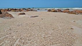 Bollar för sandbubblerkrabba på stranden Arkivbilder