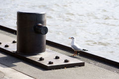Bollards and seagull Stock Image