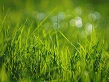 Bolle del bokeh e dell'erba un giorno soleggiato Immagine Stock