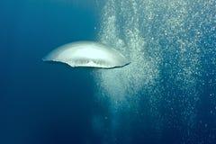Bolle subacquee Fotografia Stock