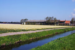 Bollenstreek Stock Photo