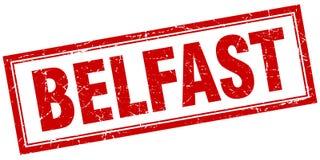 Bollo di Belfast Immagini Stock