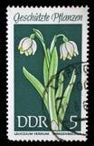 Bollo stampato nel fiocco di neve protetto della primavera delle piante di manifestazioni della RDT Fotografie Stock Libere da Diritti
